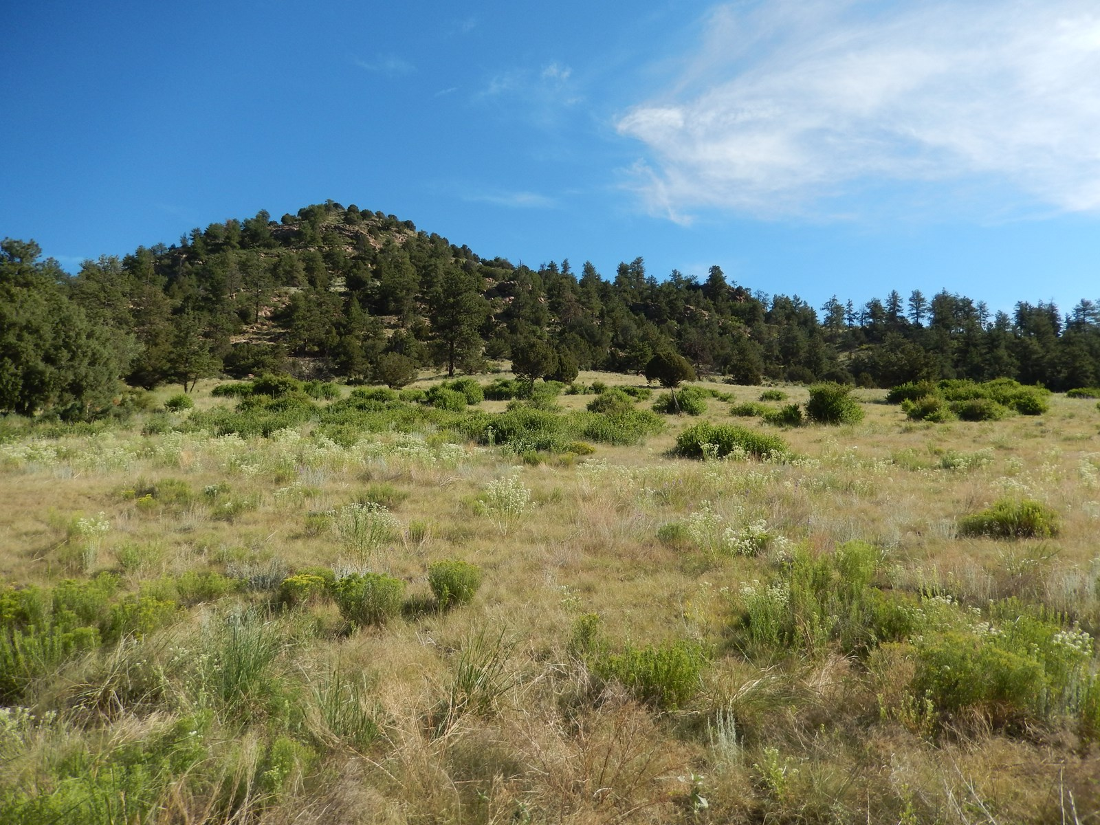 Beautiful 36 Acre Parcel with Well