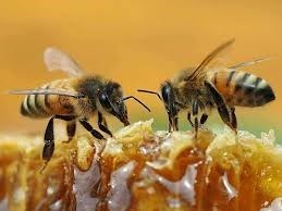 Bee Business For Sale in California
