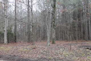 Land with Acreage for Sale in Hohenwald, Tennessee