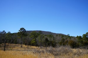 MOUNTAIN VIEW CABIN SITE AND INVESTMENT PROPERTY