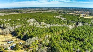 102 ACRES TIMBERLAND - INVESTMENT/RECREATION/COUNTRY ESTATE