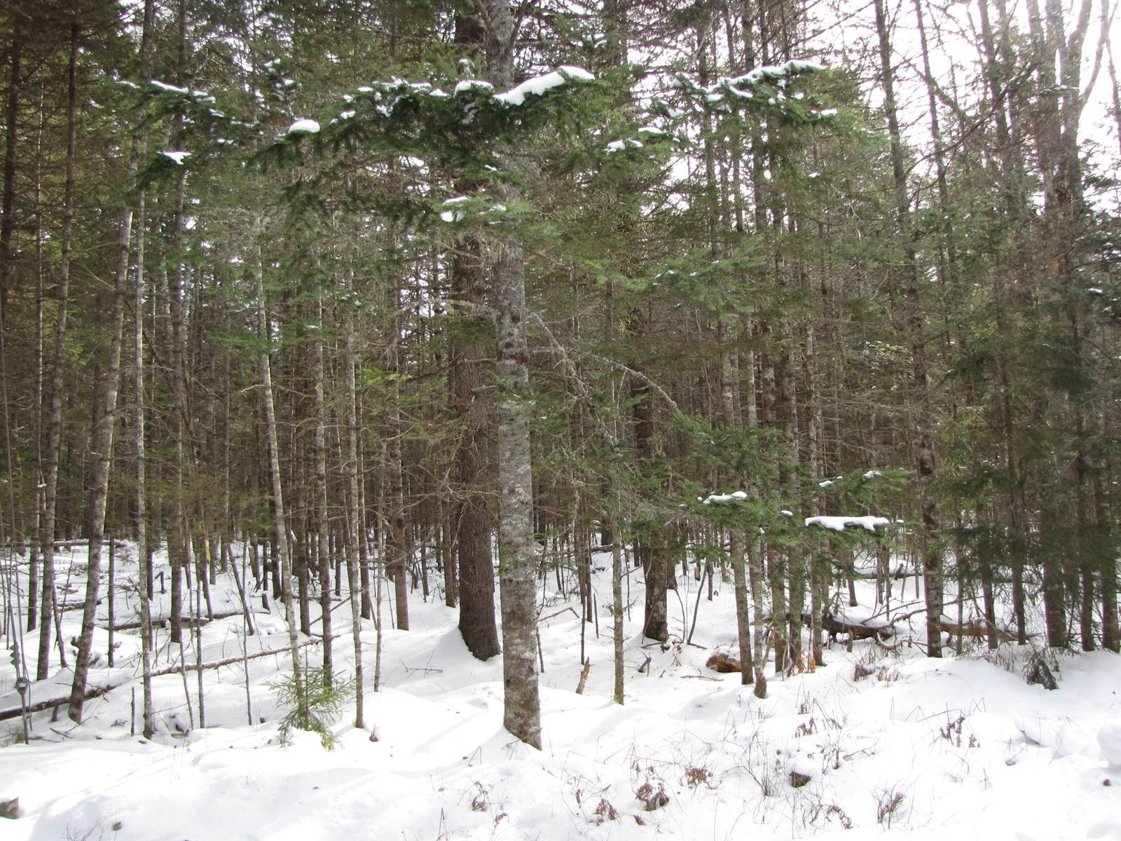 Buildable land in East Machias