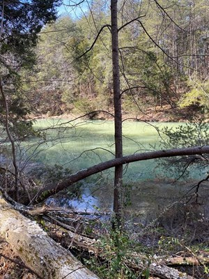 GORGEOUS MOUNTAIN LAND FOR SALE IN EAST TN