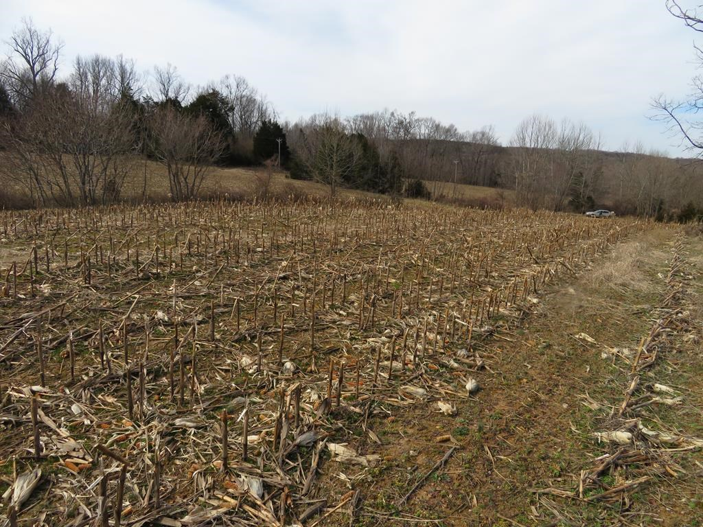 38 acres in Brookneal, VA with lots of potential