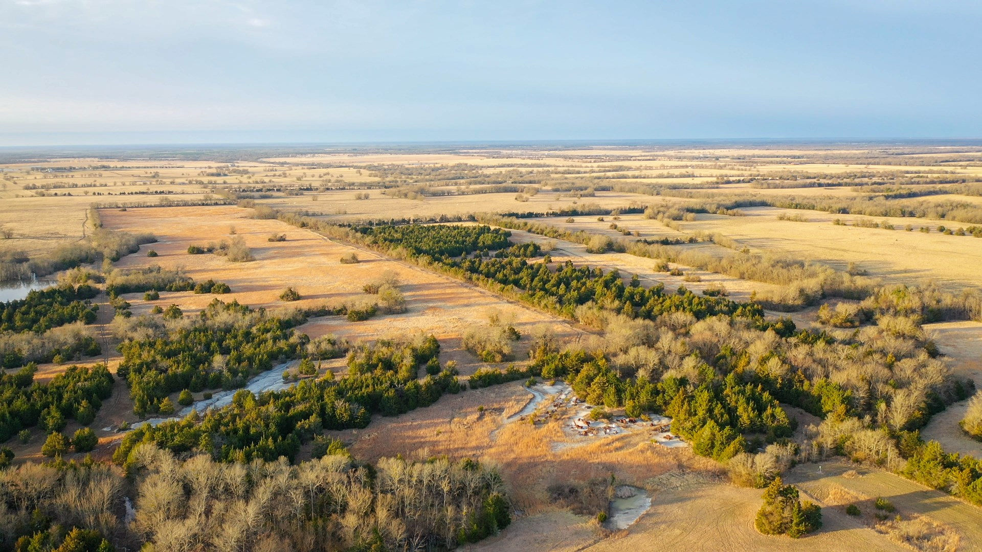 Cattle Ranch For Sale In Clarksville Texas Red River County