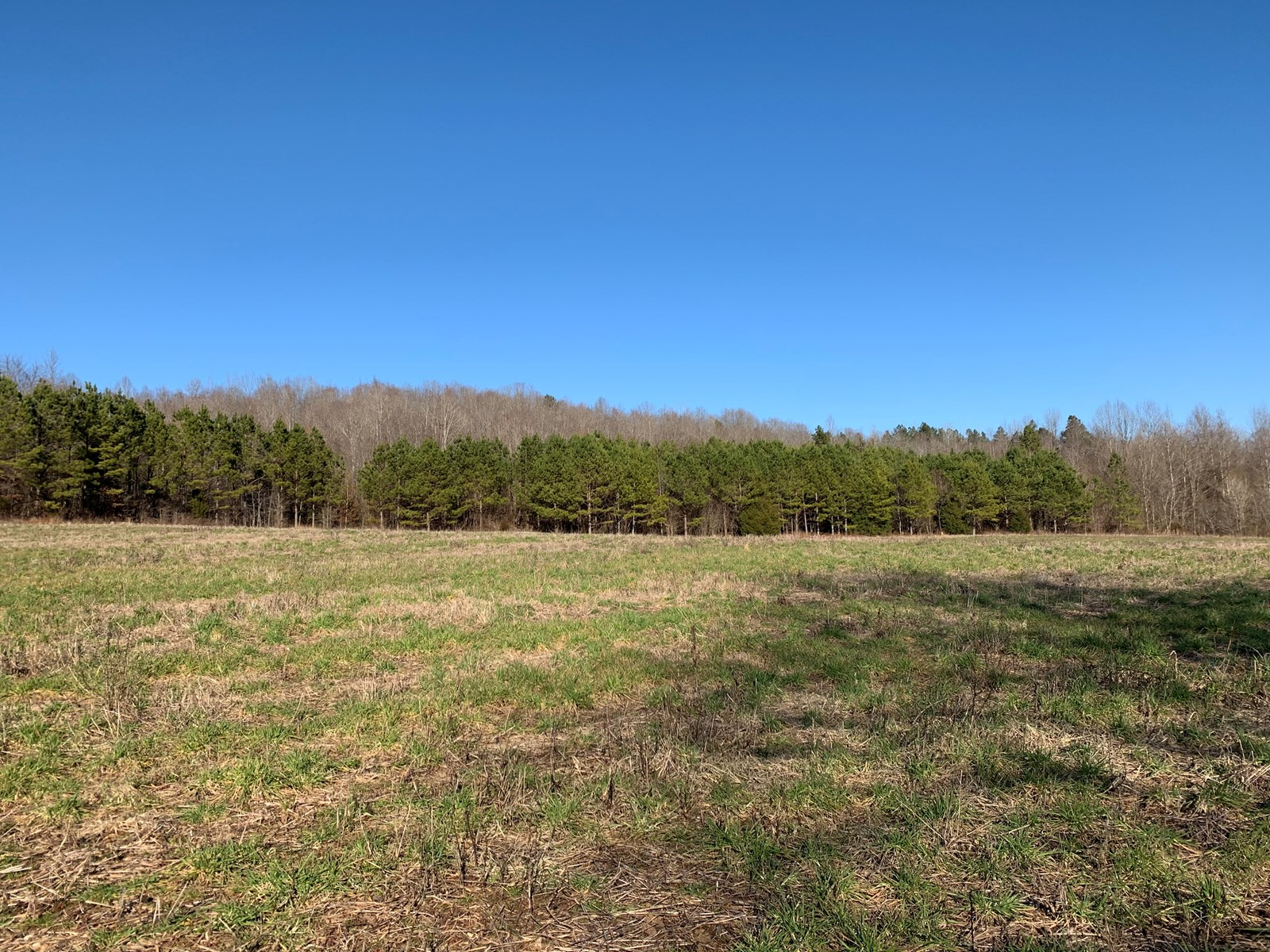 246 acres for sale in Southern Tennessee!