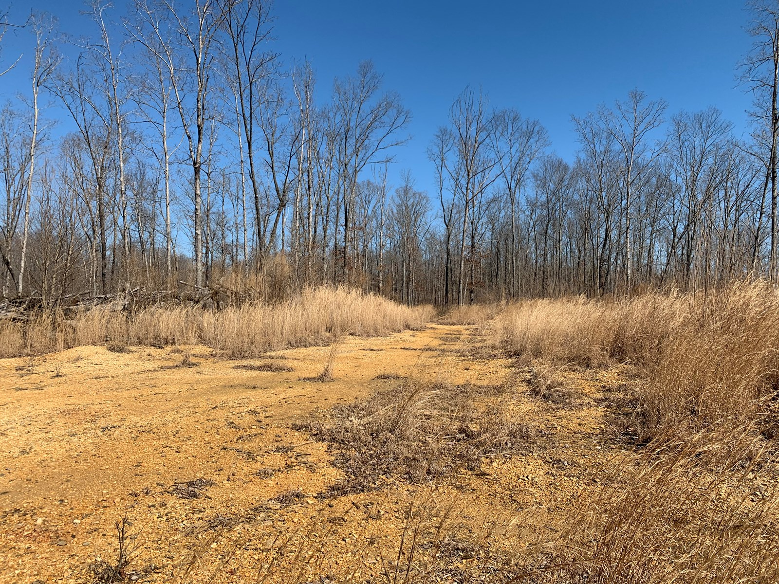 125 acres for sale in Wayne county