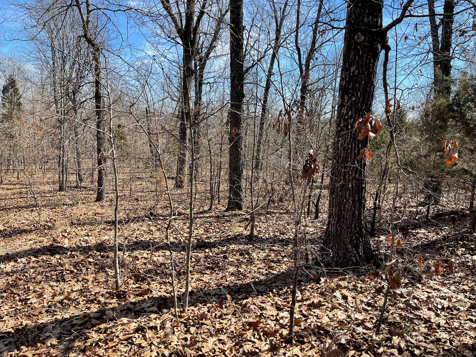 Wooded Property For Sale in Fulton County Arkansas