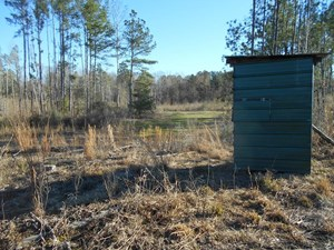 LAND FOR SALE HUNTING LAND AMITE COUNTY LIBERTY MISSISSIPPI