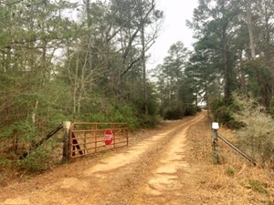 170 ACRES LAND FOR SALE HUNTING CAMP, MARION COUNTY, MS