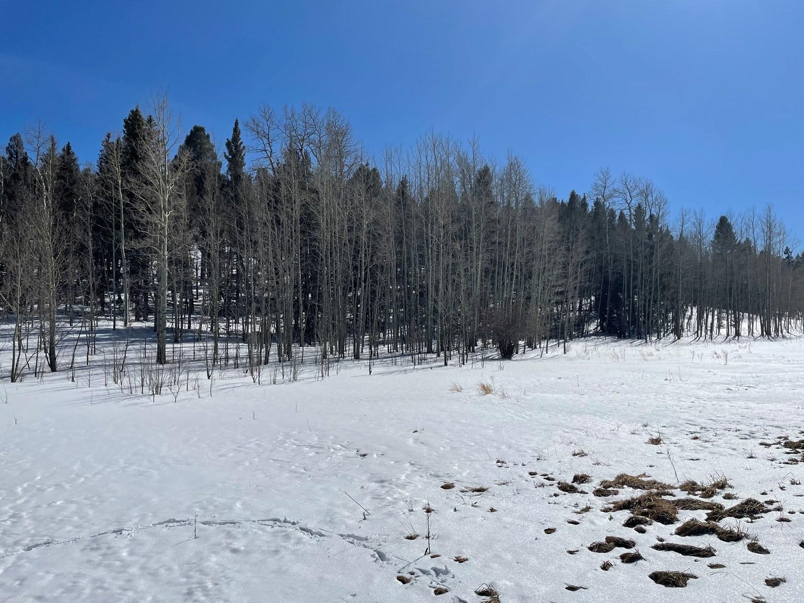 Land for sale near Florissant Colorado