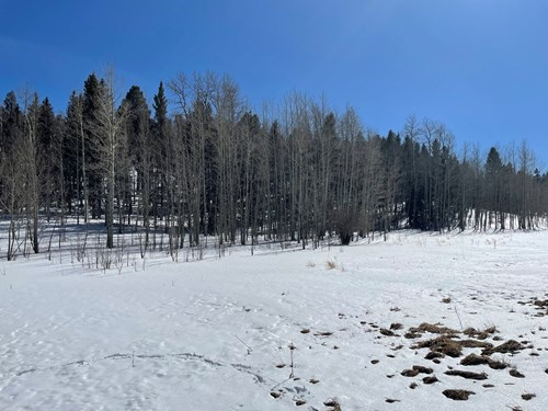 Land for sale near Florissant Colorado