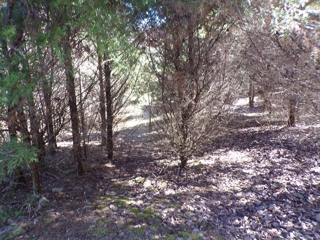 20.5 Acres in Bean Station, TN For Sale