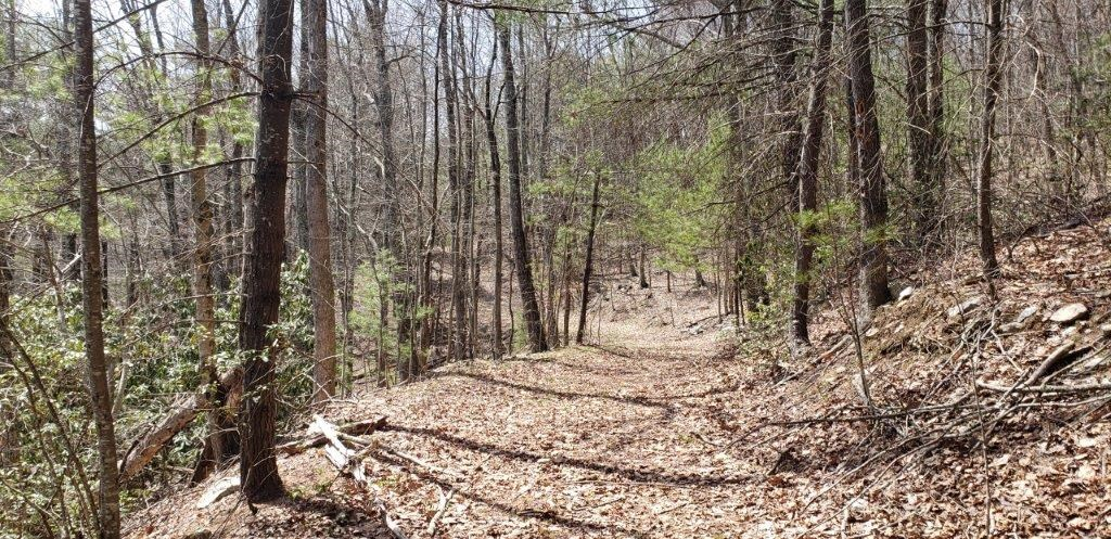 Secluded Land for Sale in Indian Valley VA