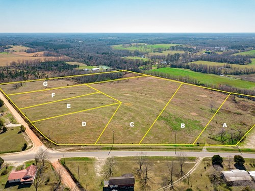 Land Auction South of Slocomb Alabama - Fadette AL