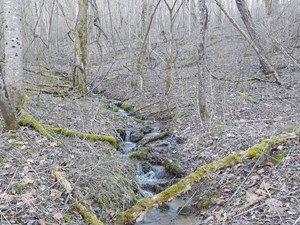 LARGE TRACT OF MOUNTAIN LAND FOR SALE IN NEWPORT VA!