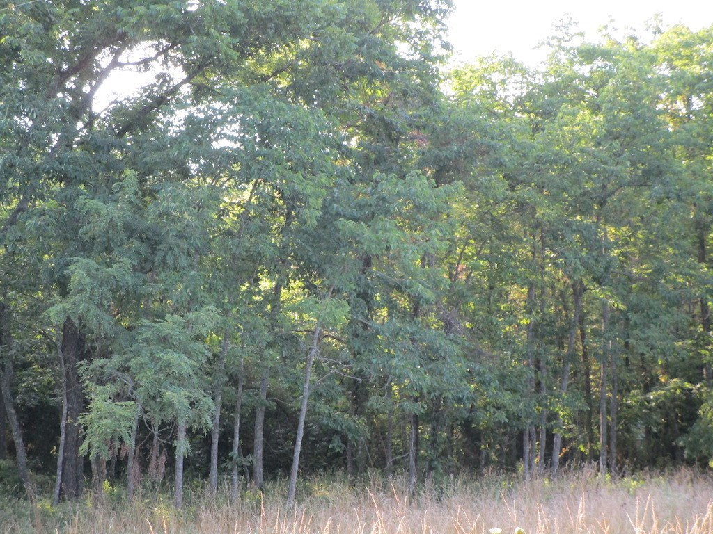 Land for Sale in South Central Missouri - Building Sites