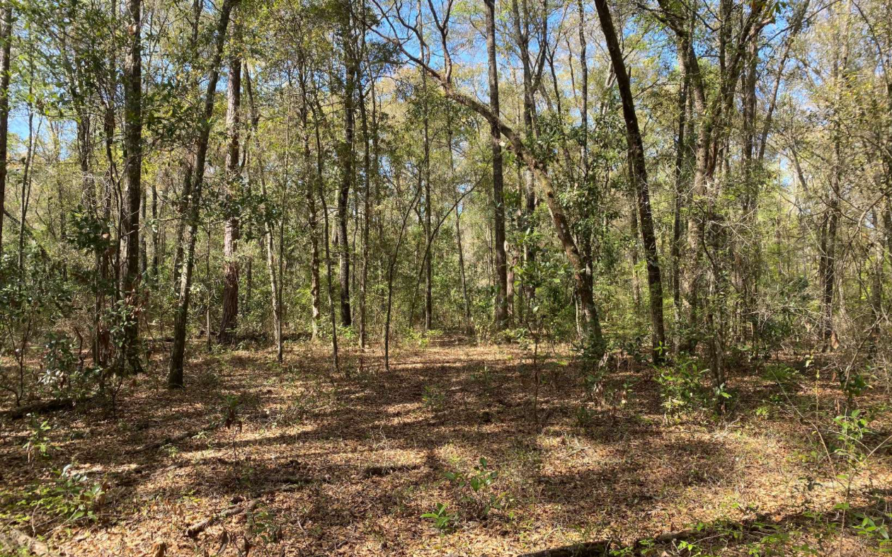 Lot With River Access in Branford, Florida