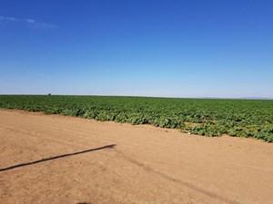 SANTA FE COUNTY, NEW MEXICO, 40-ACRE IRRIGATED FARM