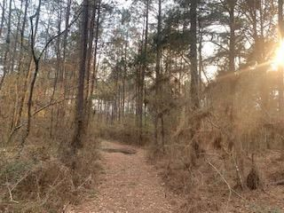 Land For Sale Timberland Hunting Land Amite County MS