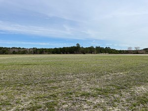 WASHINGTON COUNTY NC FARMLAND/TIMBERLAND FOR SALE