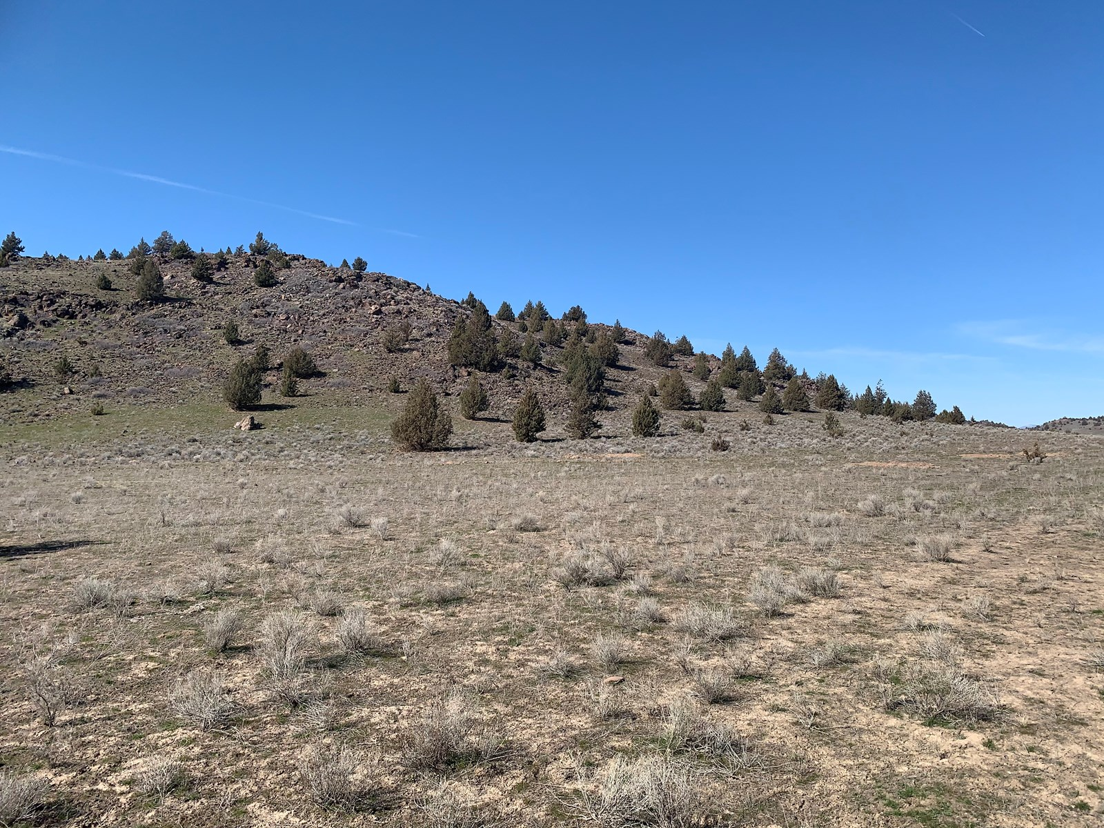 47 Acres for Sale in Siskiyou County
