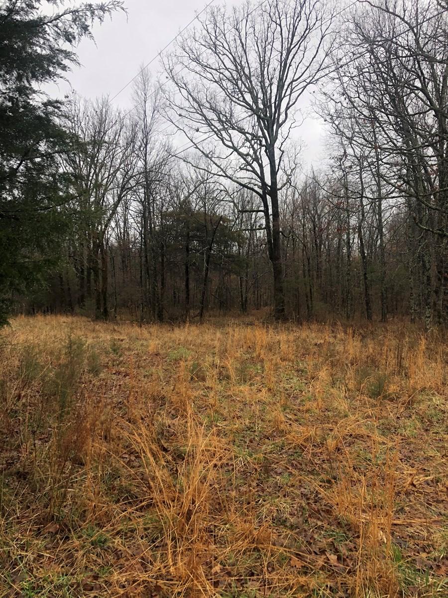 Arkansas land for sale 3 acres +/- woods