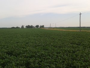 TRACT 2 OF 3 SEALED BID AUCTION - QUALITY GENTRY COUNTY FARM