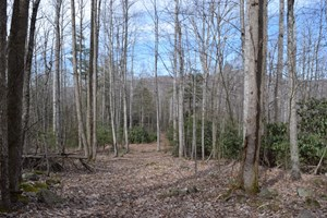LAND FOR SALE IN BENT MOUNTAIN VA!