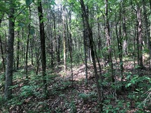 PENDING SECLUDED WOODED TRACT IN ALBANY, KY