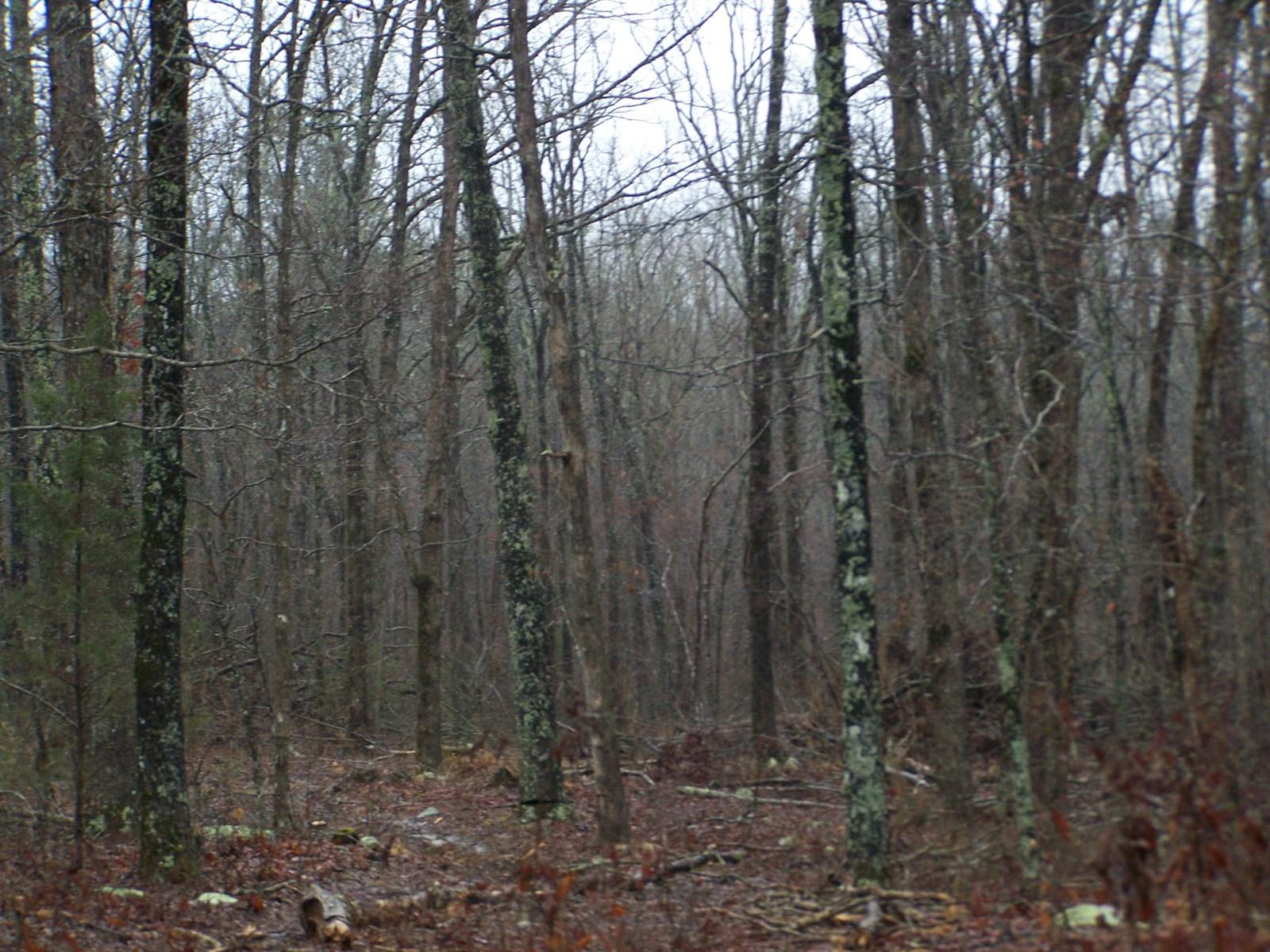 4.8 Acres Arkansas Ozarks Rural Property For Sale