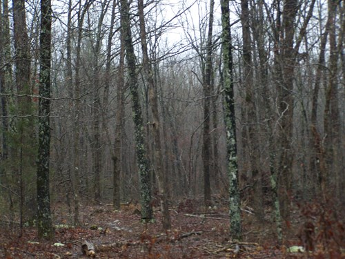 4.8 Acres Arkansas Ozarks Rural Property For Sale