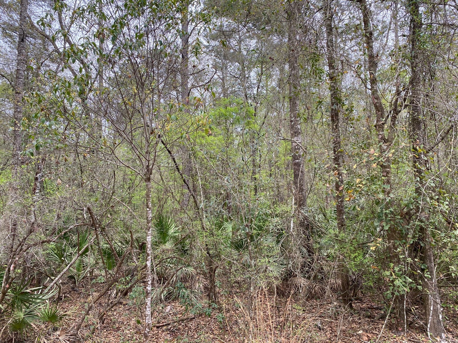1.53 ACRE RIVER SUBDIVISION LOT FOR ONLY $20,000!