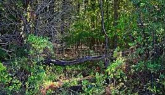 Land for sale in Horseshoe Bend, AR