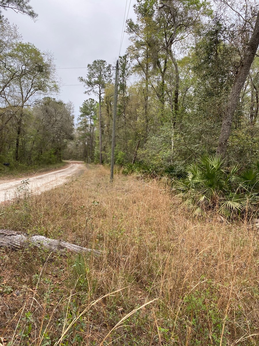1.21 ACRE VACANT LOT NEAR SUWANNEE RIVER
