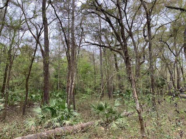 RIVER SUBDIVISION LOT FOR ONLY $9,900!