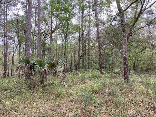 2.33 ACRES IN A RIVER SUBDIVISION FOR LESS THAN $10,000!
