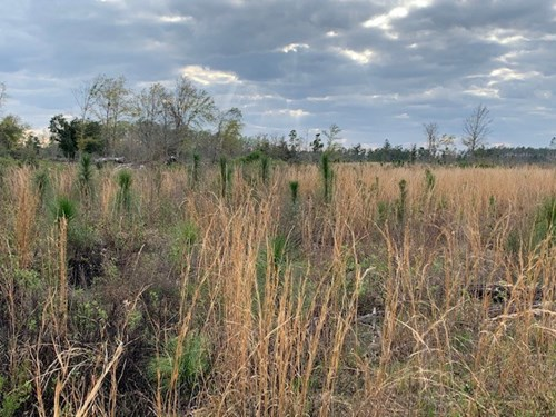 Hunting Land For Sale in Calhoun County, Fl