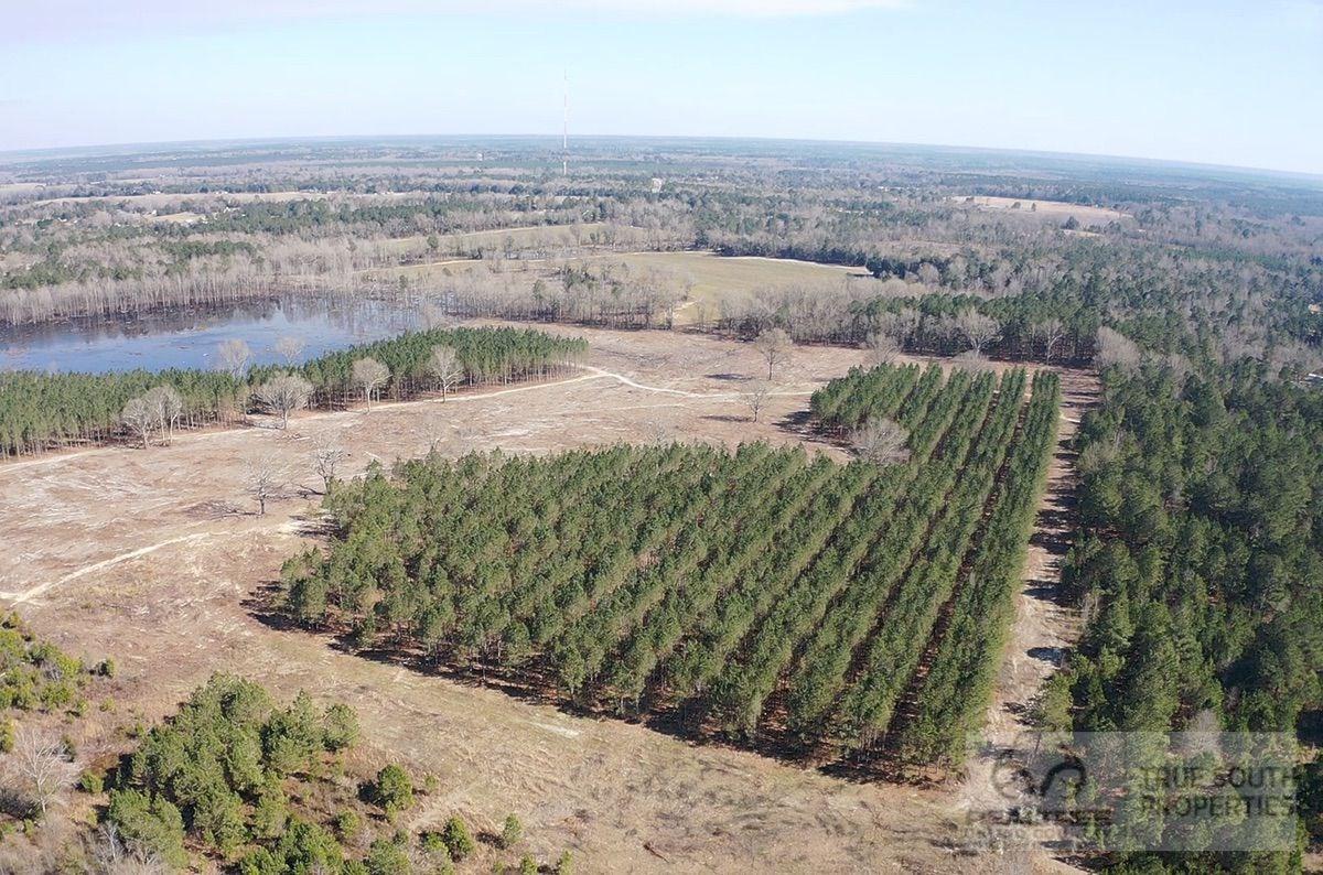 Barnwell - Red Oak Hunting & Timber Land