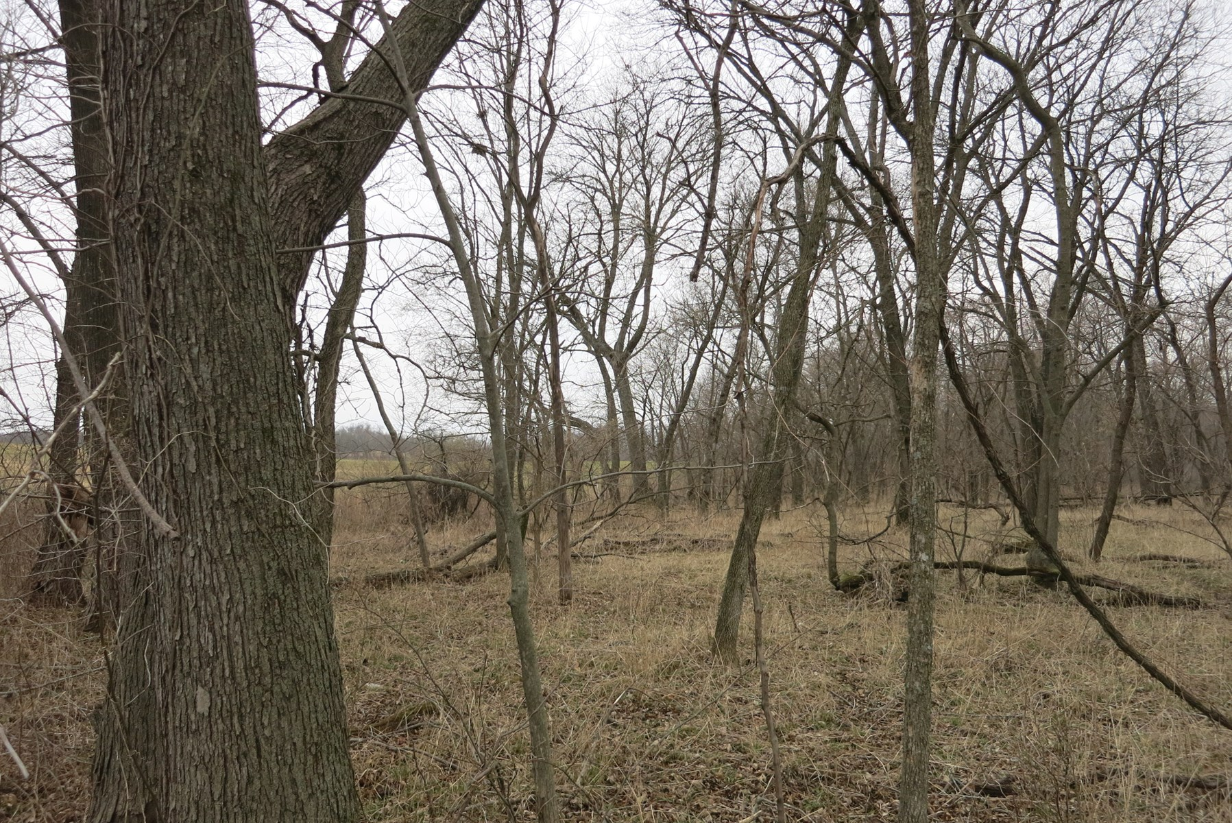 Hunting Land For Sale in Northwest MO