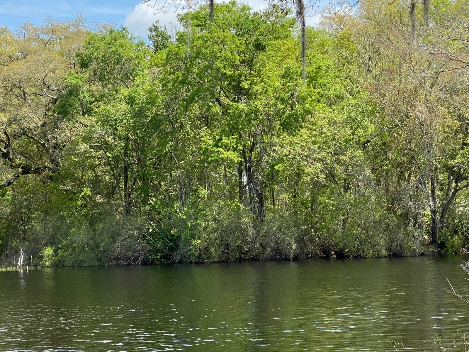 BEAUTIFUL PICKETT LAKE LOT IN MAYO, FL FOR $55,000.