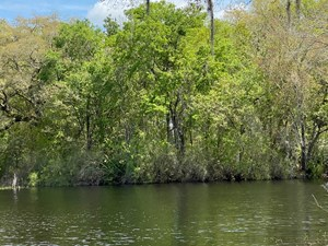 BEAUTIFUL PICKETT LAKE LOT IN MAYO, FL FOR $55,000.