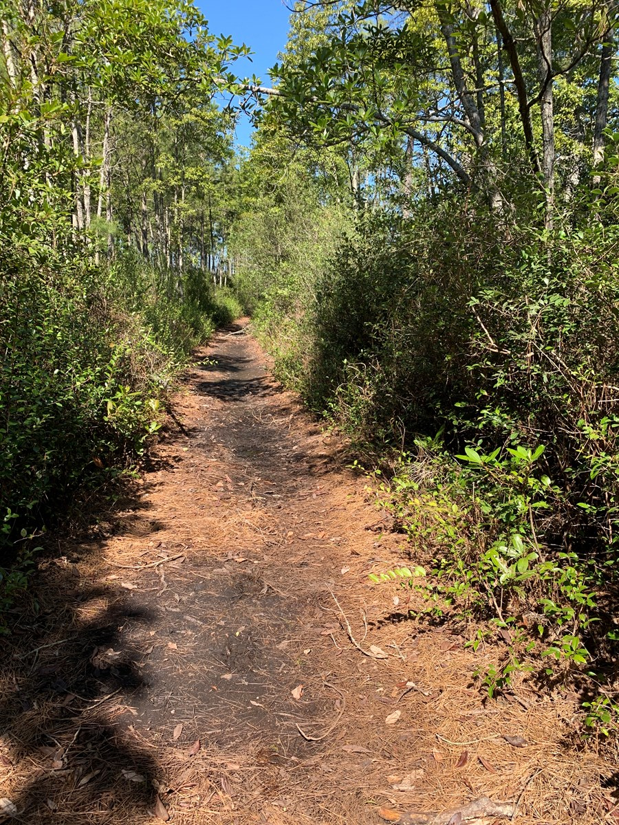 Recreational Hunting Tract for Sale Beaufort Co., Pantego NC