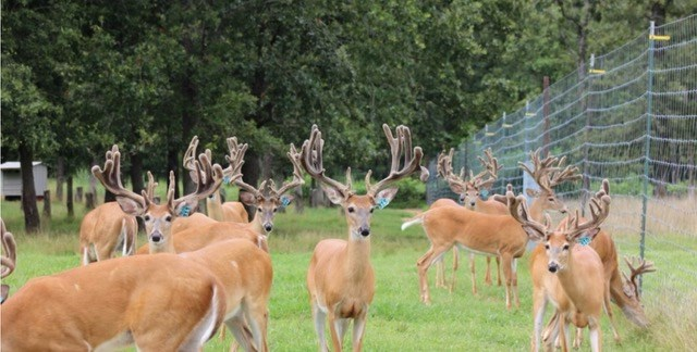 Deer Farm & Hunting Ranch with Home For Sale in S.E. MO