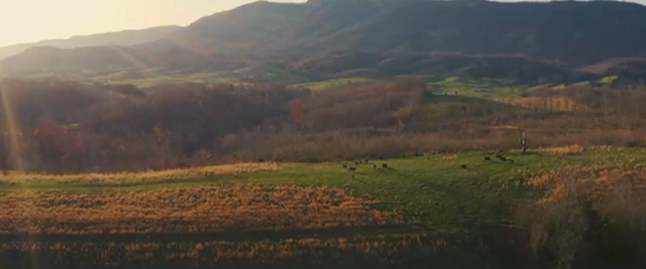 118 Acres Farmland For Sale in Rose Hill, VA