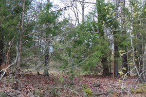 HUNTING LAND FOR SALE IN FREESTONE COUNTY, TEXAS