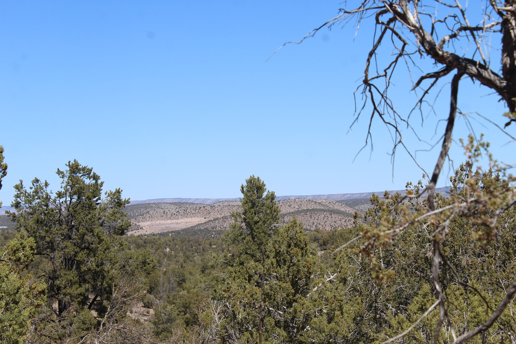 Over 40 Acres - Prime Mountain and Hunting Area