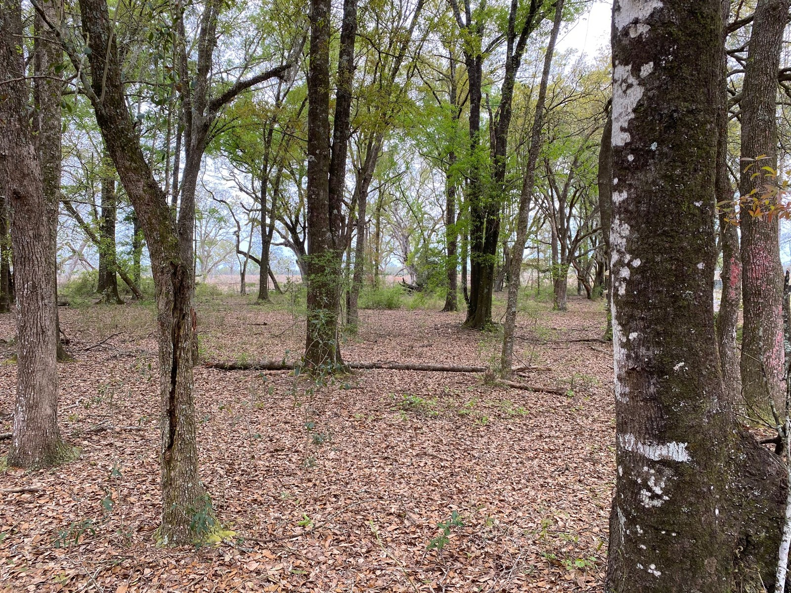 4.51 ACRES LOCATED IN MADISON COUNTY ON SR 53 FOR ONLY $45,0