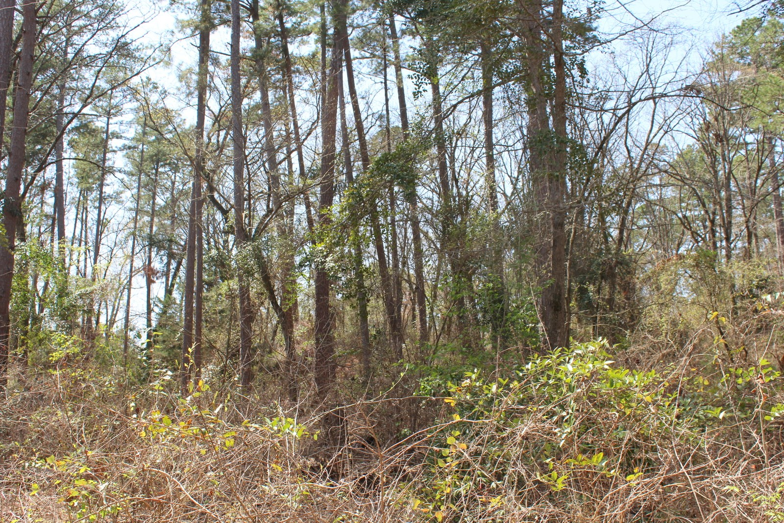ALMOST AN ACRE IN 4-D COUNTRY ESTATES, WINNSBORO, TEXAS