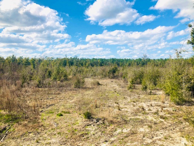 Beautiful 20 acre parcel in High Springs